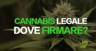 cannabis legale dove firmare