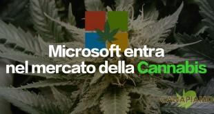 Microsoft entra nel mercato della Cannabis