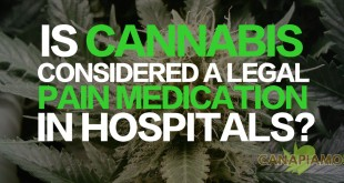 Is Cannabis Considered A Legal Pain Medication In Hospitals?