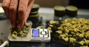 Cannabis, una firma per la legalizzazione