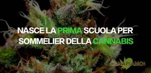 scuolasommeliercannabis