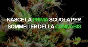 La prima scuola per sommelier della cannabis
