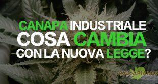 CANAPA INDUSTRIALE: COSA CAMBIA CON LA NUOVA LEGGE?