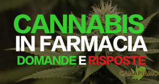Vendita cannabis in farmacia FAQ