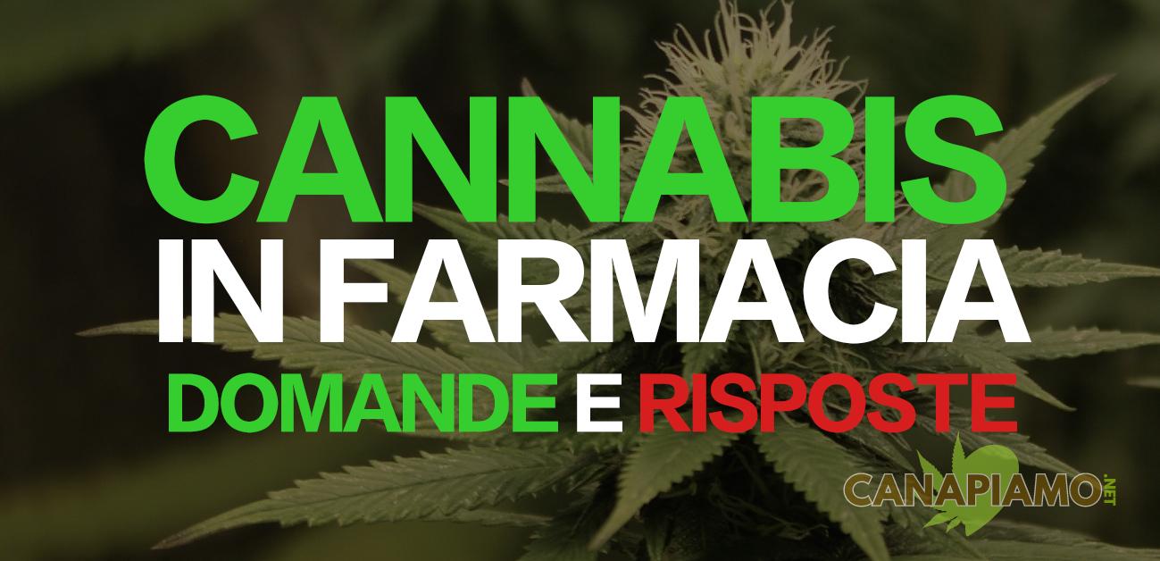 Vendita cannabis in farmacia FAQ