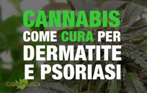 Cannabis Dermatite