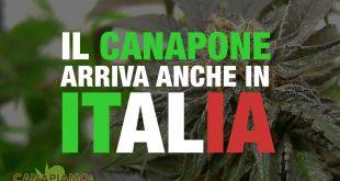 Il 'Canapone' arriva anche in Italia!
