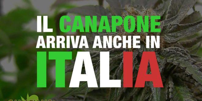 Canapone Italia