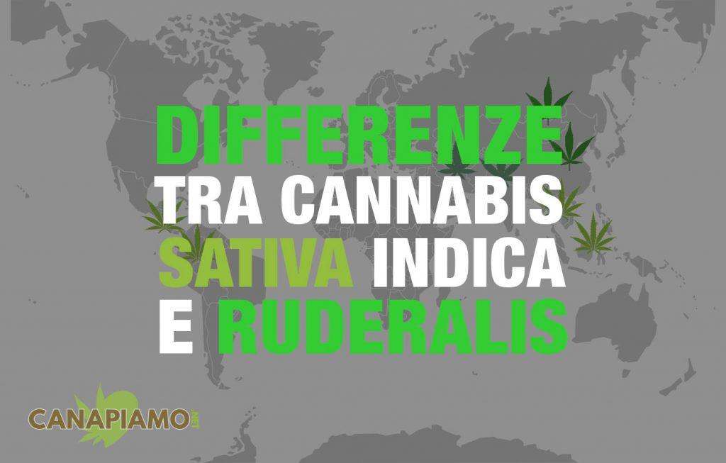 differenze-cannabis-sativa-indica-ruderalis