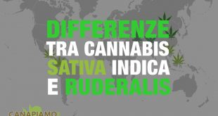 Differenze tra Cannabis Sativa, Cannabis Indica e Ruderalis