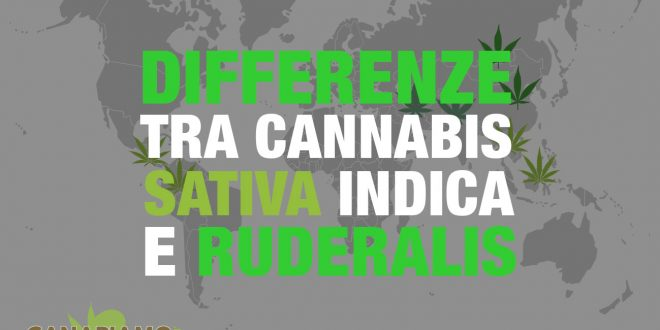 Differenze cannabis sativa indica ruderalis