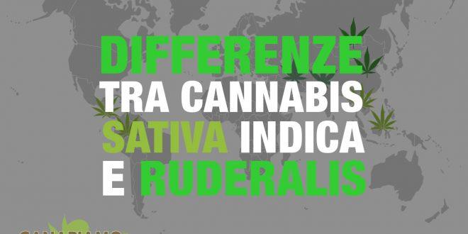 Differenze cannabis sativa indica ruderalis