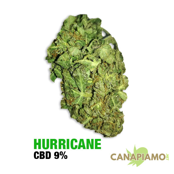 Hurricane - Cannaibis light online