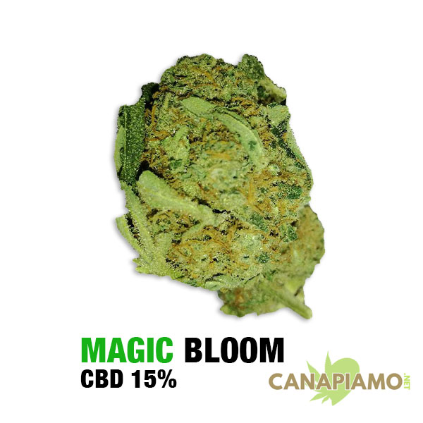 Magic Bloom CBD 15%