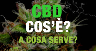 CBD: Cos'é?