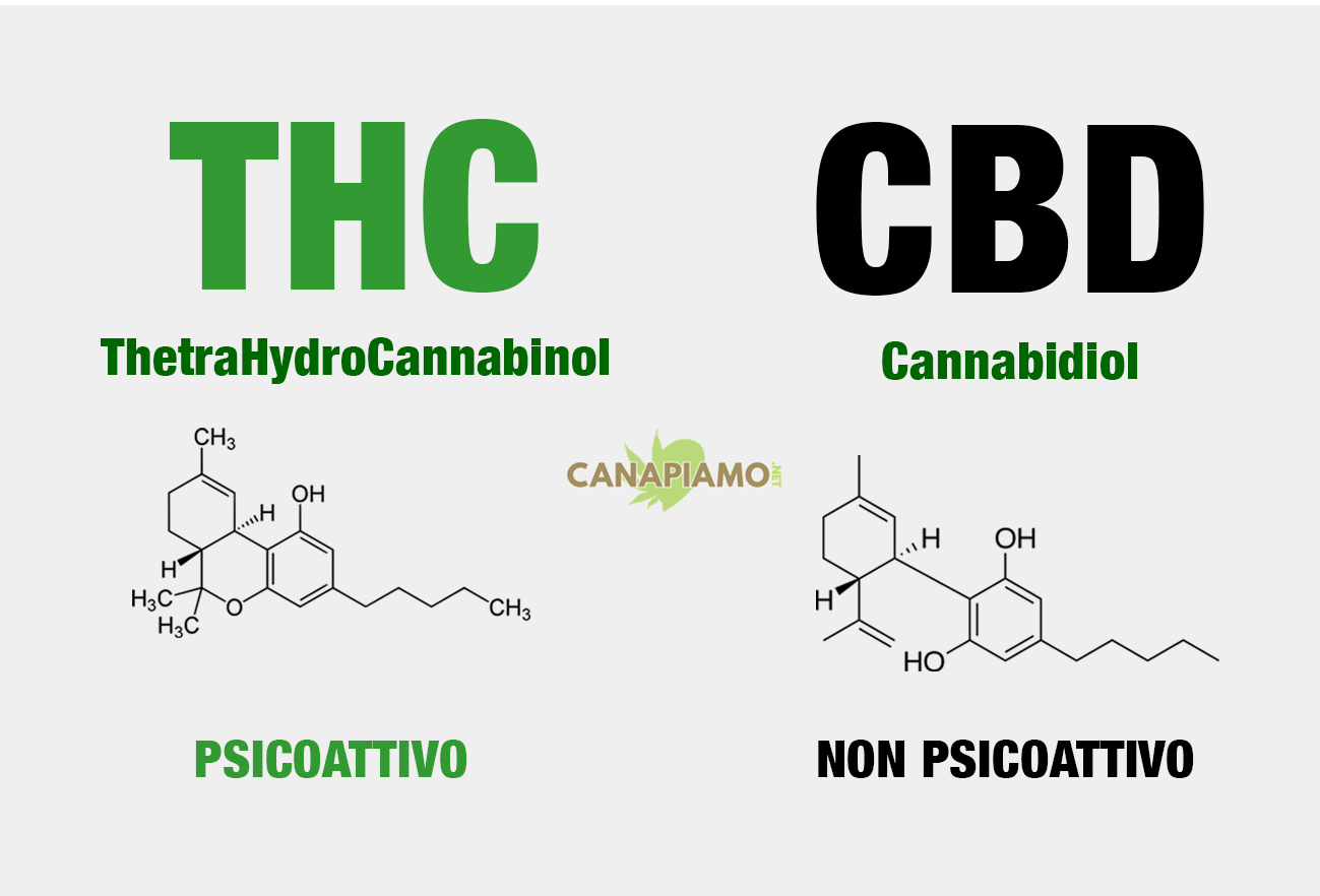 CBD - THC Differenze