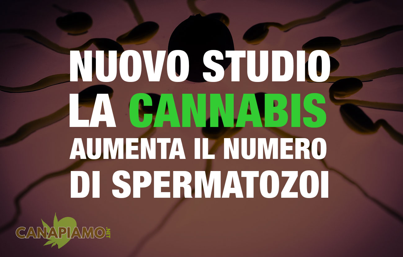Cannabis Spermatozoi