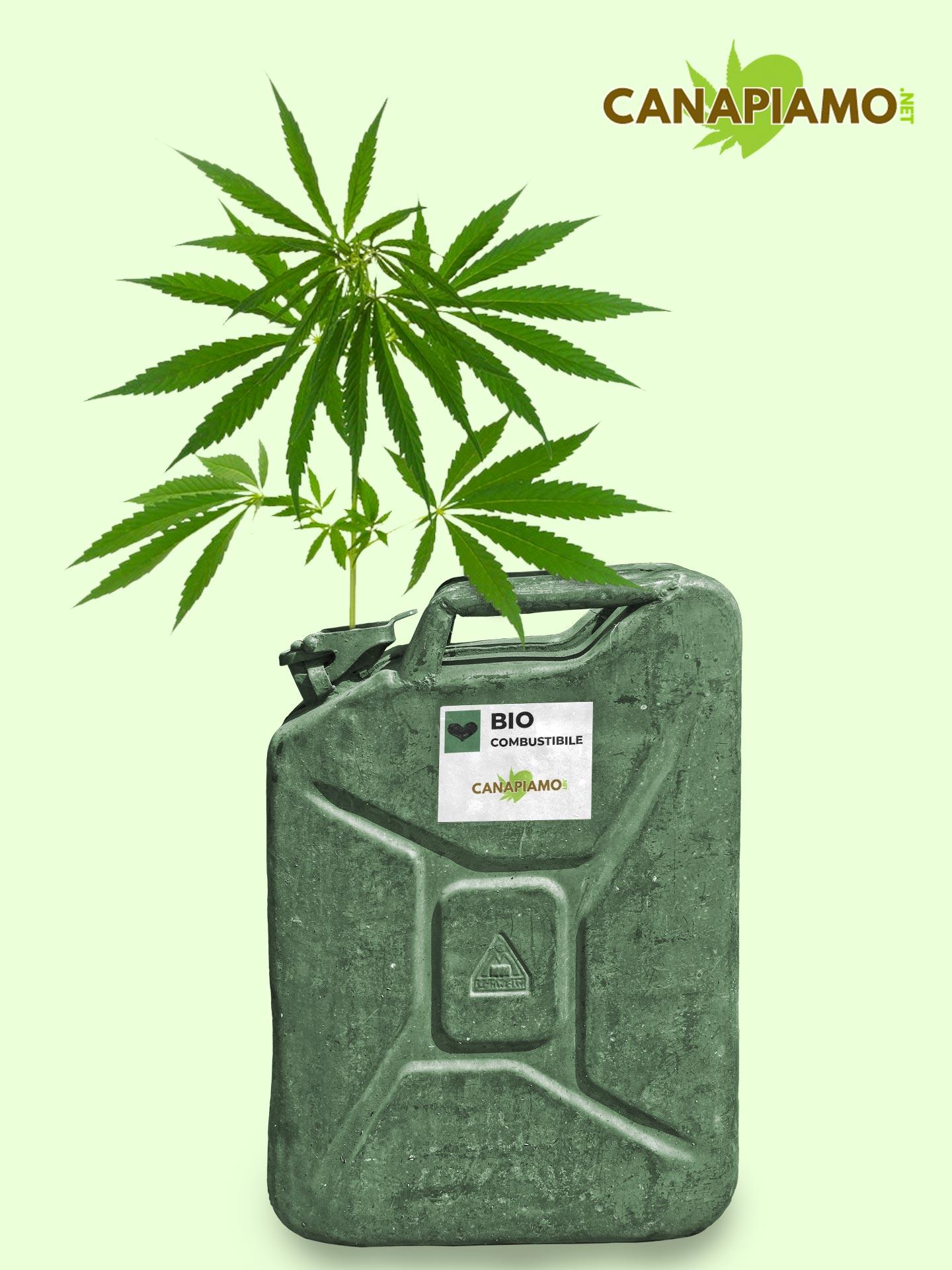utilizzi della canapa, combustibili canapa, biocombustibili, bio diesel