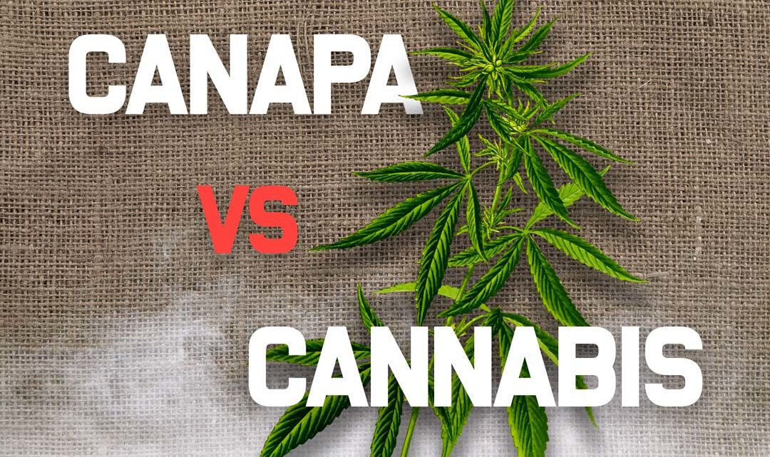Differenza tra Canapa, Cannabis e Marijuana